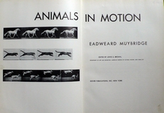 Animals in motion.